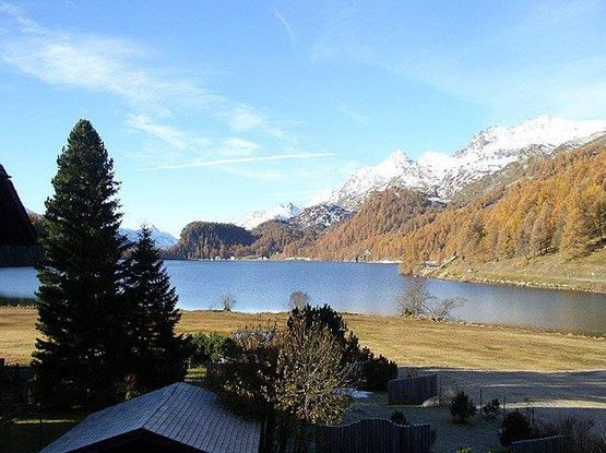 View Marmotta – Hotel Chesa Grischa in Sils-Baselgia